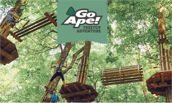 Go Ape Treetop Adventure Zipline and More