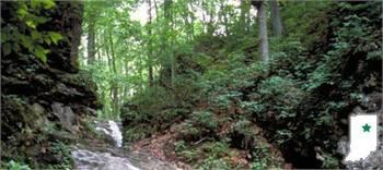 Salamonie River State Forest